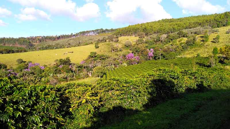 Minas-Hill-Coffee-Brazilian-Bean-Specialty-Sitio-Boa-Vista-800x450