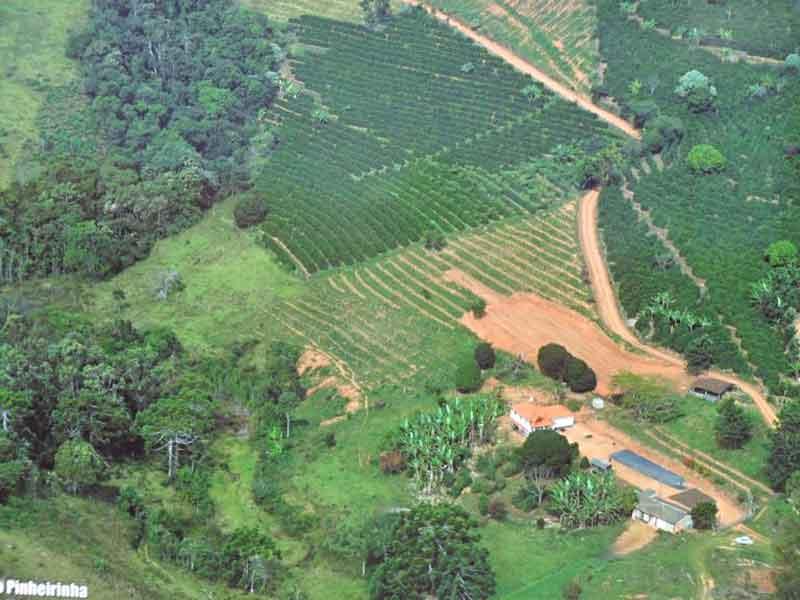 Minas-Hill-Coffee-Brazilian-Specialty-Pinheirinh-APAS-800x600