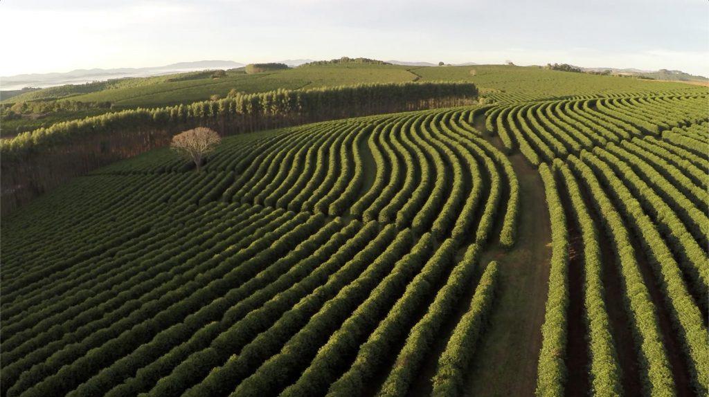 Carbon positive coffee farm
