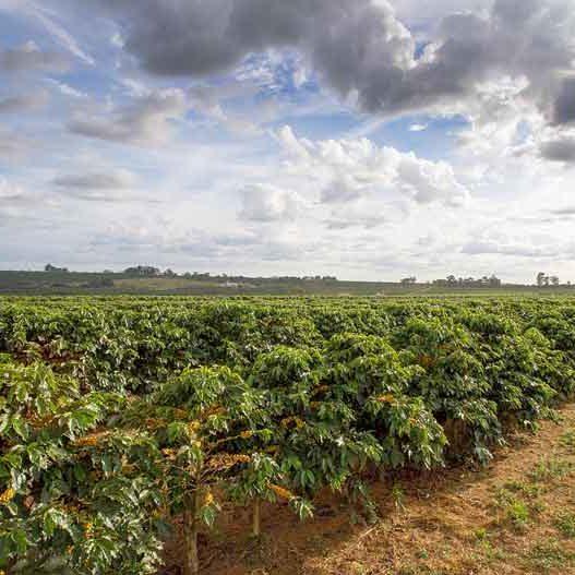 Cerrado-Mineiro-Coffee-Brazil-Farm-View-800x527